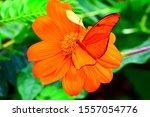 Orange Butterfly Sitting On An...