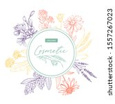 herbal cosmetics hand drawn... | Shutterstock .eps vector #1557267023