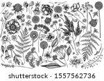 vector set of hand drawn black... | Shutterstock .eps vector #1557562736