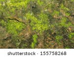 Green Moss On Stone Texture