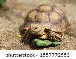 Stock photo close up african spurred tortoise resting in the garden slow life africa spurred tortoise 1557772553