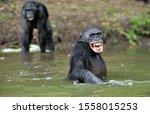 Smiling Bonobo In The Water....