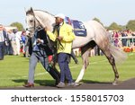 Small photo of DONCASTER RACECOURSE, STH YORKSHIRE, UK : 14 SEPTEMBER 2019 : The 2019 St Leger winner Logician being led round the Parade Ring prior to winning the race with Frankie Dettori