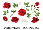 red roses hand drawn color set. ... | Shutterstock .eps vector #1558207559