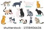 cartoon cat characters... | Shutterstock .eps vector #1558406636