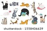 Cartoon Cat Characters...