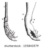 Fracture Of The Lower Extremity ...