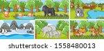 background scenes of animals in ... | Shutterstock .eps vector #1558480013