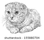 drawing of cute scottish fold... | Shutterstock .eps vector #155880704