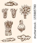 Set Of Vector Vintage Hand...