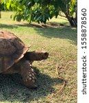 Stock photo tortoise in the tortoise farm 1558878560