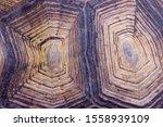 Stock photo blurred pattern of tortoise shell cropped shot of tortoise shell blurred abstract nature 1558939109
