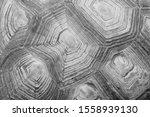 Stock photo blurred pattern of tortoise shell cropped shot of tortoise shell blurred abstract nature 1558939130