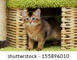 portrait of a cute somali... | Shutterstock . vector #155896010