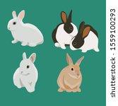 set of bunny rabbit vector...   Shutterstock .eps vector #1559100293