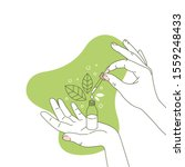 woman hand holding organic... | Shutterstock .eps vector #1559248433