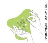 woman hand holding organic... | Shutterstock .eps vector #1559248433