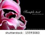 flower template | Shutterstock . vector #15593083