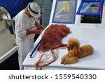 Poodle Lying On Board Fishing...