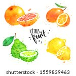 watercolor hand drawn... | Shutterstock . vector #1559839463