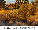 Mojave Desert Landscape At...