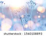 Frozen Twigs In Hoarfrost...