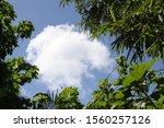 Cloud Peeking Through Green...