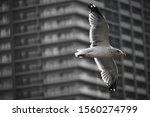 A Seagull Flies Past A Large...