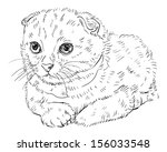 drawing of cute scottish fold... | Shutterstock .eps vector #156033548
