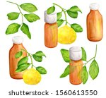 watercolor lemon essential oil... | Shutterstock . vector #1560613550
