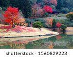 Autumn Scene Of Colorful Maple...
