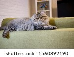 Playful Long Haired Kitten...