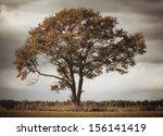 Lonely Oak Tree Fall