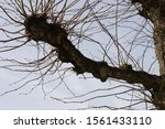 Looking Up At A Branch Of A...