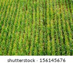 color photography of green... | Shutterstock . vector #156145676