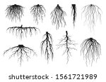 tree roots silhouettes isolated ... | Shutterstock .eps vector #1561721989