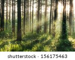 beautiful sunset in the woods  | Shutterstock . vector #156175463