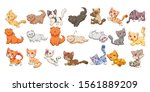 cat kitten baby funny character ... | Shutterstock .eps vector #1561889209