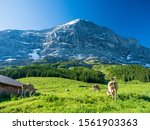 View Of The Summer Alps From...