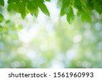 Green Leaf Nature On Blurred...