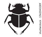 scarabaeus sacer   sacred...   Shutterstock .eps vector #1562043289