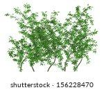 green wall imitation bush | Shutterstock . vector #156228470