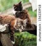 Stock photo adorable tabby kitten 156233918