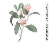 pink magnolia flowers with... | Shutterstock .eps vector #1562373973