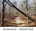 Fallen Tree Leaning Over A...