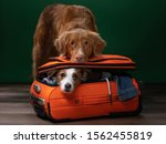 Two Dogs Help Get Ready For A...
