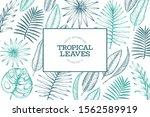 tropical plants frame design.... | Shutterstock .eps vector #1562589919