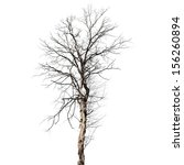Dry Dead Tree Isolated On Whit...