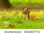 Stock photo hands up squirrel 156264773