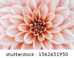 Defocused Pastel  Peach  Cora...